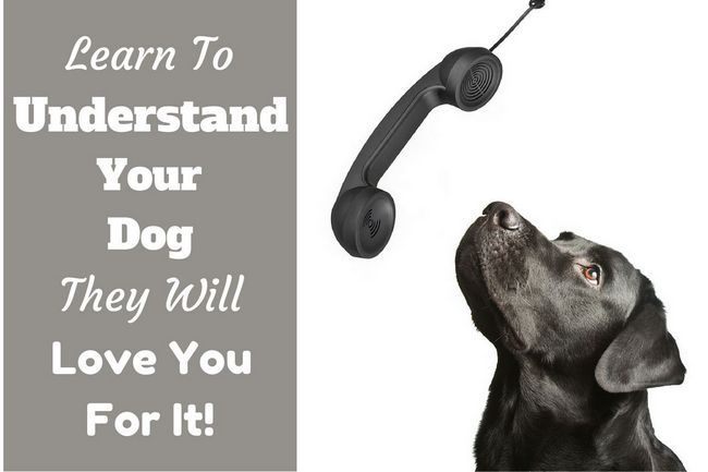 Understanding your dog – the most valuable thing you can learn to do