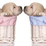 Unique & unusual dog names