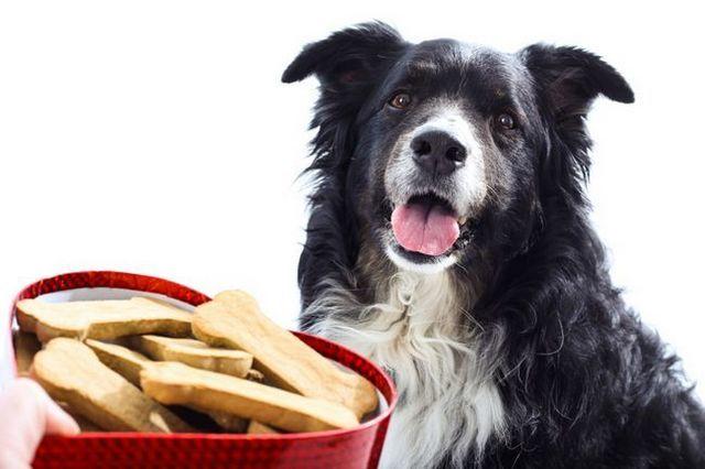 Valentine's day dog treat recipes