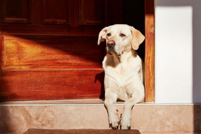 Video: how to stop door bolting for your dog's safety