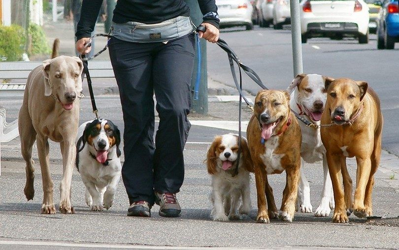 Walking your dog: teach buster to walk politely on a leash