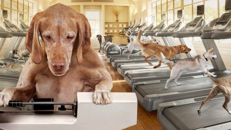 Weight loss dog food: help your friend shed a few pounds