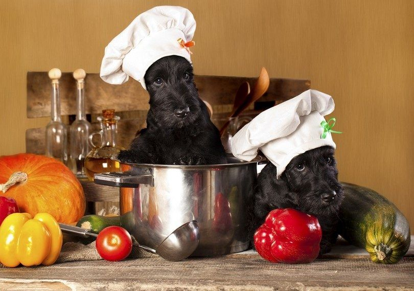 Weight loss food for dogs