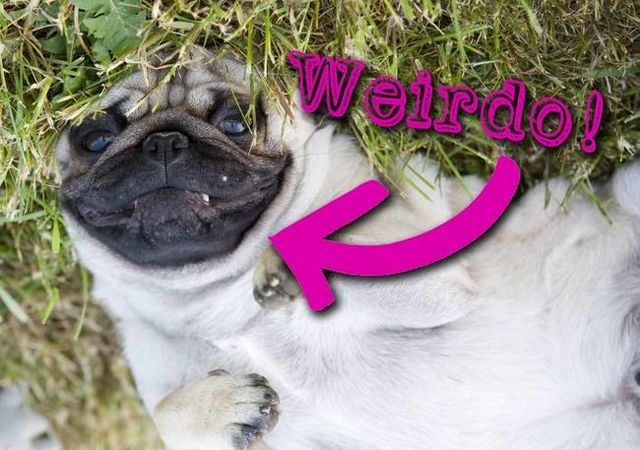 Why does my dog do that? Weird dog behaviors explained
