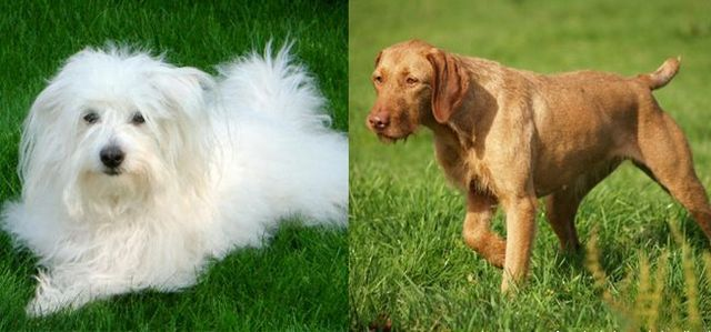 Westminster welcomes 2 new breeds in 2015