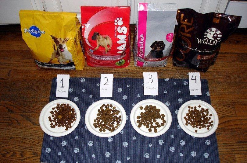 Dog Food experiment