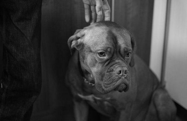 dog-653902_1280