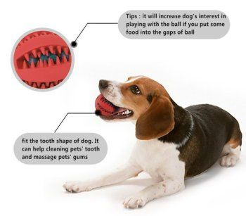 dog dental toy