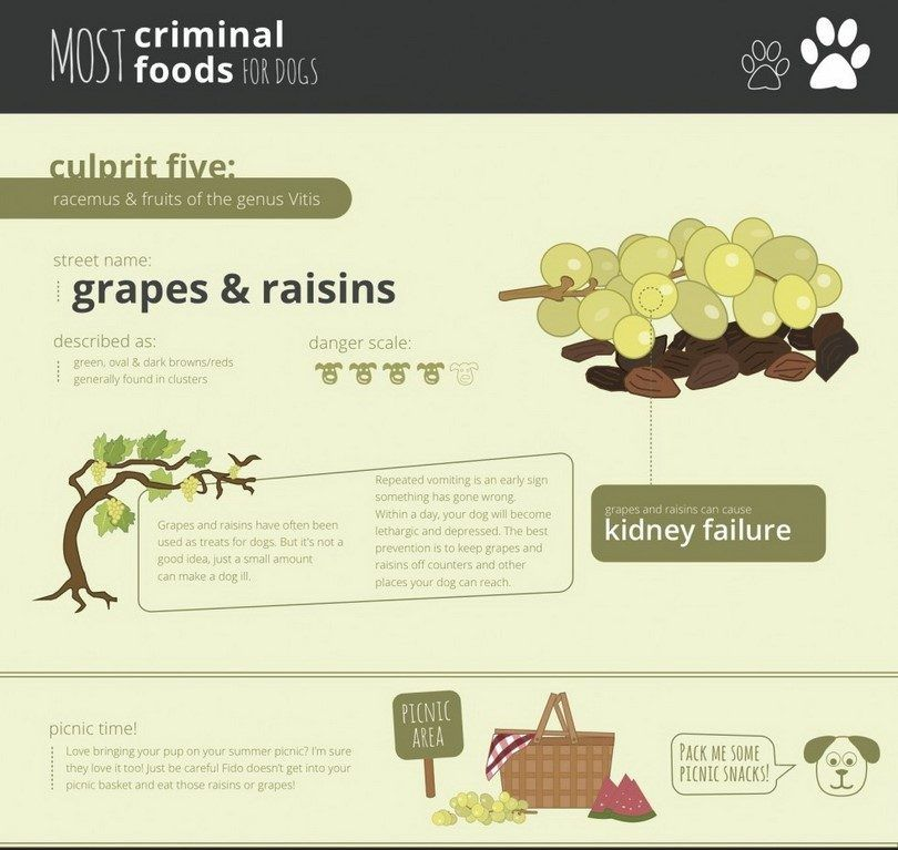 Grape toxic for dogs