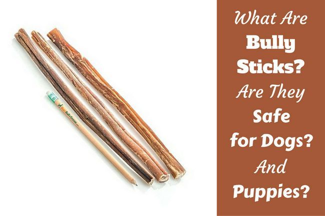 What is a bully stick? What are they made of? Are they safe?