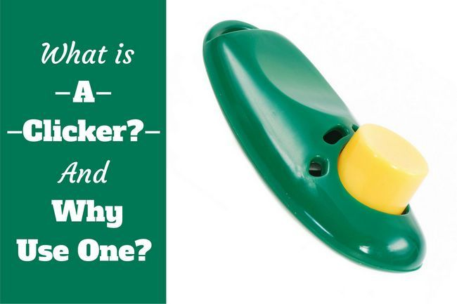 What is a clicker and why use one? An introduction to event markers