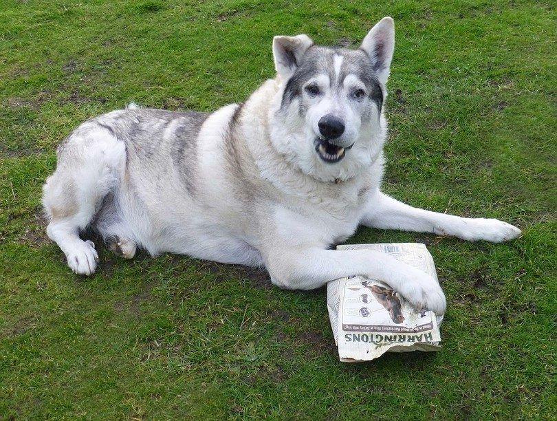 Dog wants food