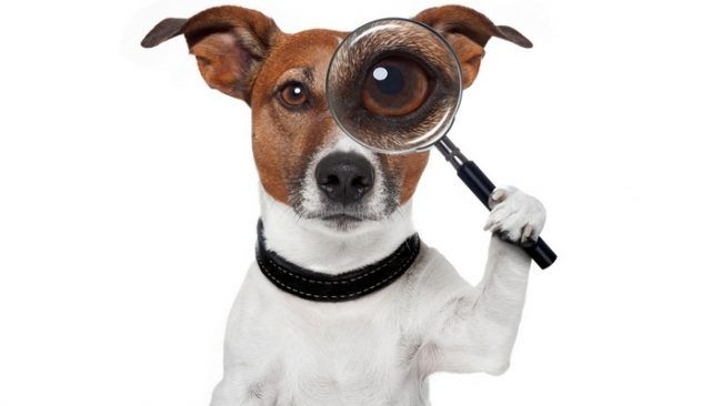 What is this 'pet detective' doing to help dog owners?