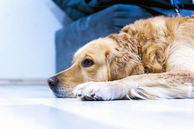 what to give dog with upset stomach