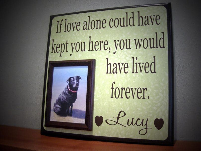 Framed dog and message