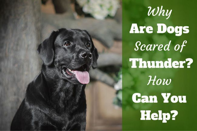 Why are dogs scared of thunder? How can you help thunderphobia?