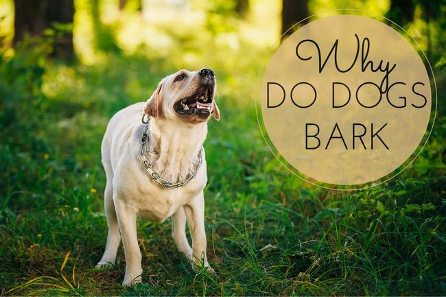 Why do dogs bark? What are the causes?
