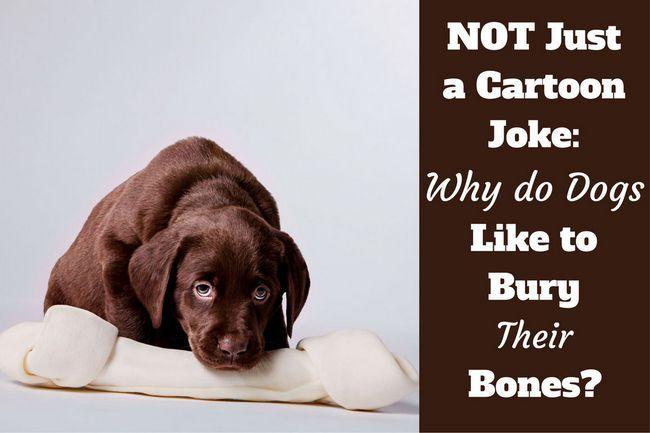 Why do dogs bury bones?