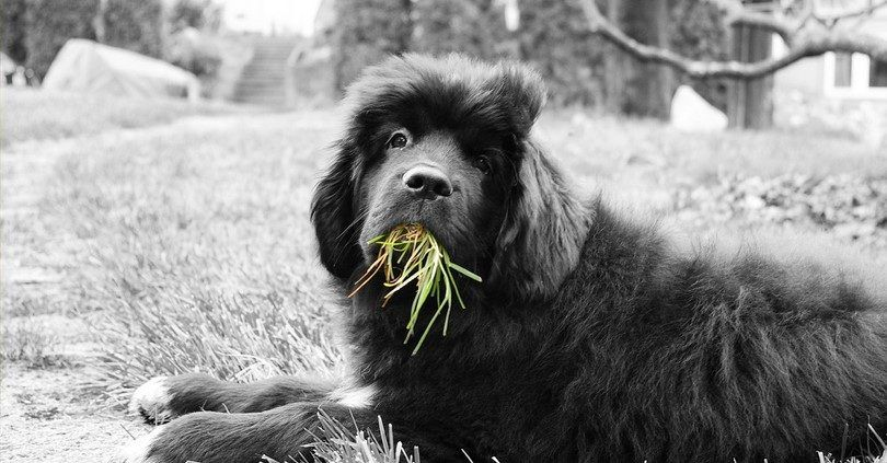 Eating grass proudly