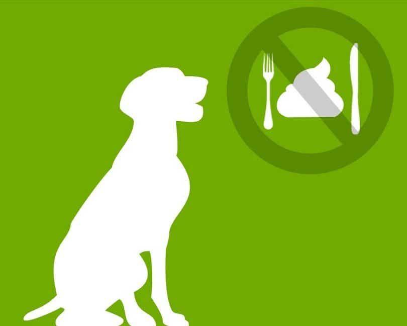 Forbidden eating poop