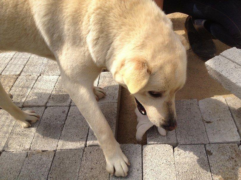 Dog eating his own poop