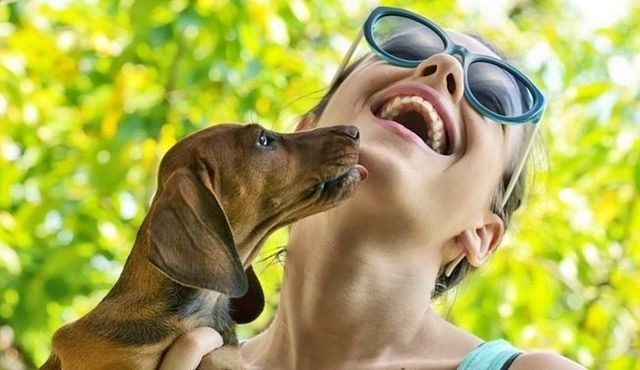 Why do dogs lick? Hint: it's not just because they love you