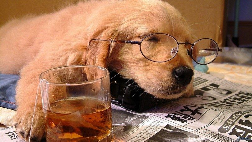 Sleeping dog with tea