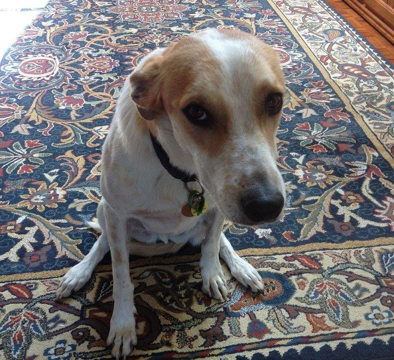 Sad dog sitting and whining
