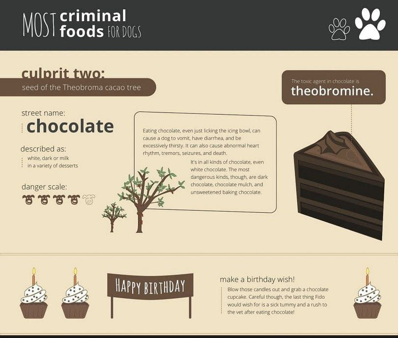 Theobromine and chocolate