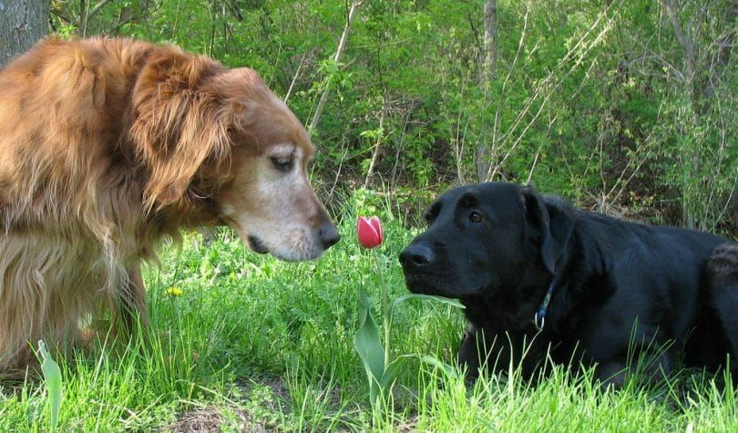 Dogs tulip and grass