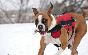 Why Dog Parents Need to Invest in Dog Vests