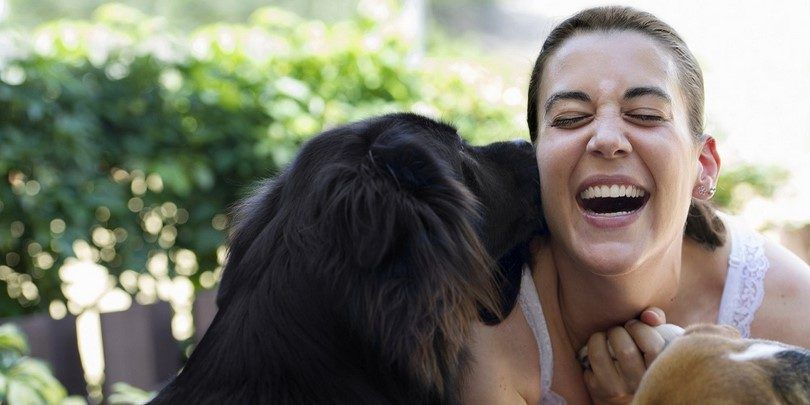 Why dogs lick: understand what fido is trying to say