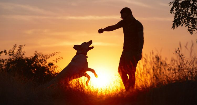 Why Some Dogs Dislike Men and What To Do About It