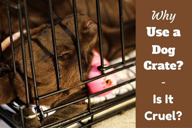 Why use a dog crate – and is it cruel to crate a dog?