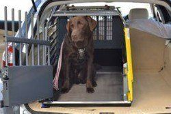 why use a dog crate - a labrador in a car travel crate, much safer!