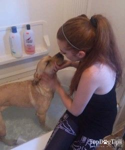 Why Using Human Shampoo On Dogs is Dangerous for Dogs
