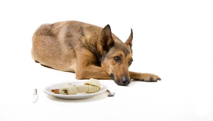 Why won't my dog eat? Here's why dogs may refuse food