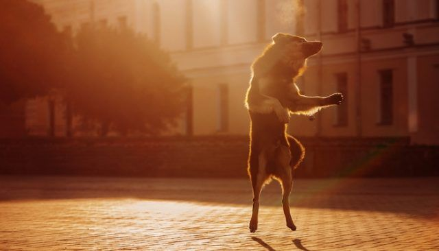 "Will you dance with me? Say, ""woof!"""