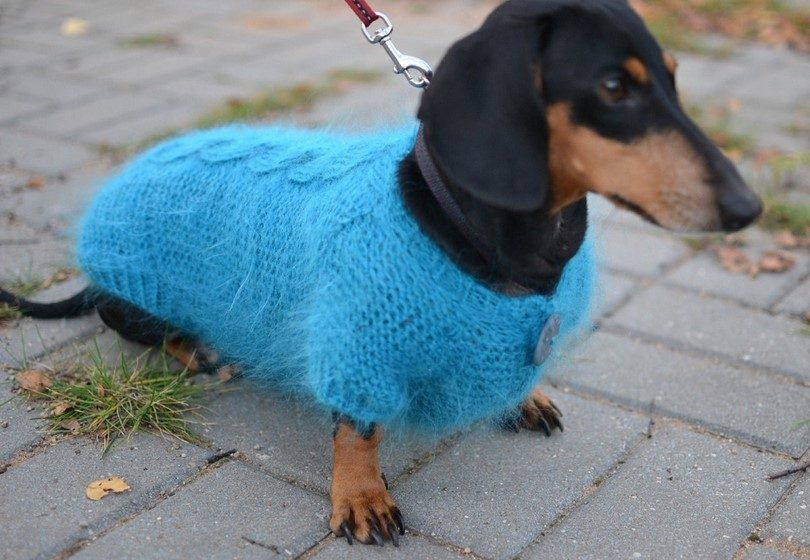 Dog sweater for cold weather