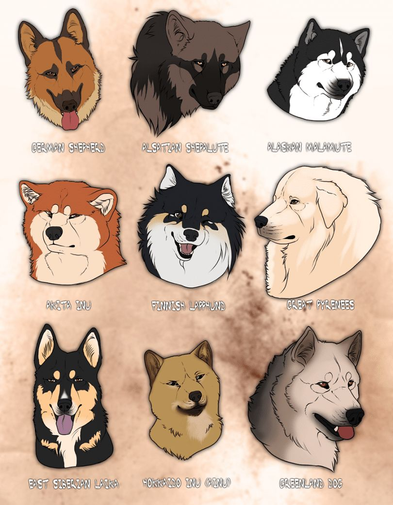 Wolf like dog breeds: pursuing your canine's ancestral heritage