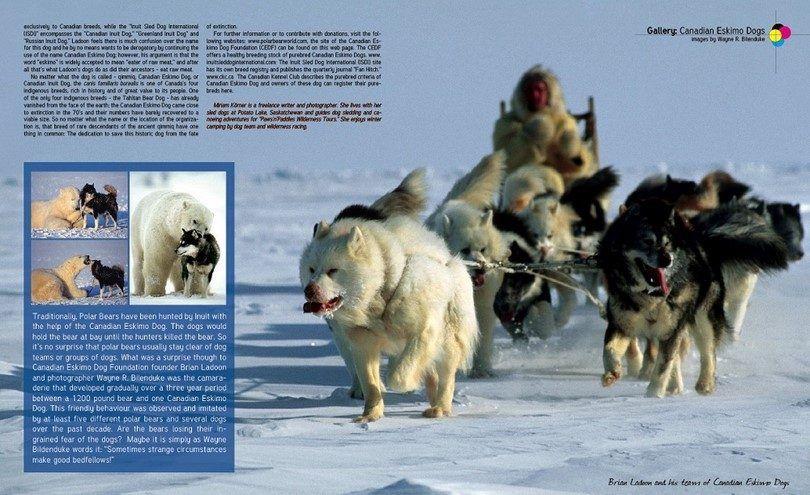 The Canadian Eskimo dog