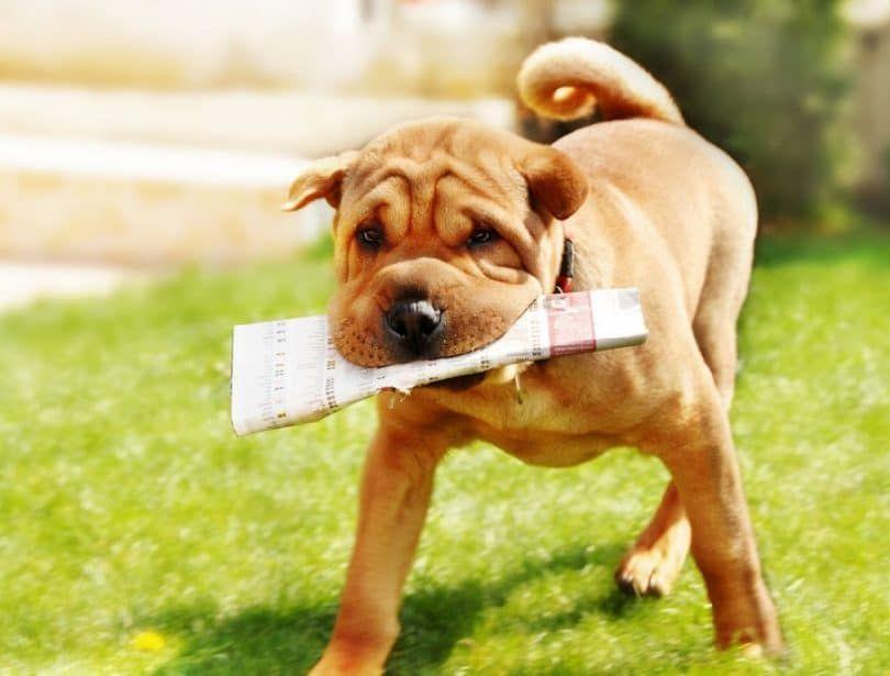 Possessive dog