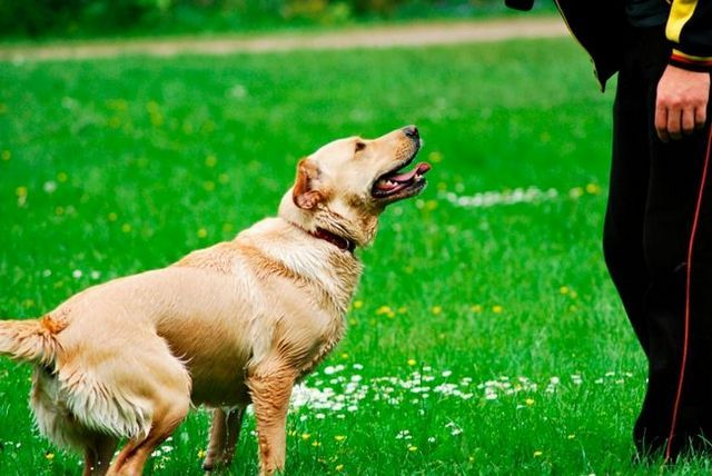 Your dog doesn't do what you ask? It's time to set realistic goals