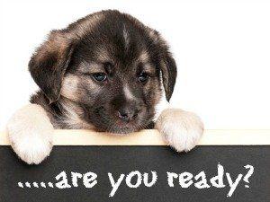 Your new puppy checklist